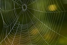 Tender Web by Christina Rollo. Nature abstract design and pattern of a delicate spider's web against green background.