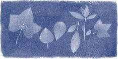 213 aniversario del nacimiento de Anna Atkins