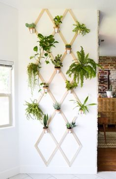 DOMINO:Unexpected Ways to Display Your Plants