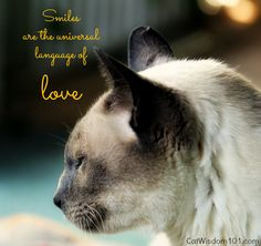 Mondays With Merlin: Cats Smile For Sugar The Dog