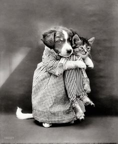 "1914. ""Puppy 'mother' in costume holding kitten 'baby'."" Like millions of other kitties, this one was probably adopted."