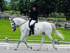 Gorgeous 16.2 Lusitano/Trakehner grey mare, schooling Third Level. Jumps and hacks too! Very responsive and loves to work! Hacks  alone or in company. With professional training could go much further in the training! $25,000