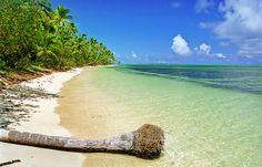 South Pacific beach at Ha'apai, Tonga    A palm tree was lying along the long beach at Uiha, in the Ha'apai group of Tonga