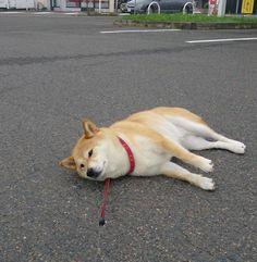 犬のさんぽ  sanpodog (11)