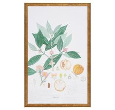 Estimated Shipping is 3-4 weeks.  Classic splendor is seen in this lovely reproduction of the original botanical. This piece is framed in an elegant gold wood m