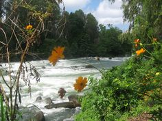 Maria Cristina Rapids. You can't miss this when going to Maria Cristina Falls in Iligan City.