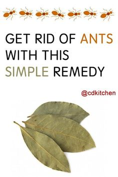 A recipe for Bayleaf Ant Remedy made with salt, bay. Recipe Directions: Take a large stock pot or canning kettle, add salt and bay leaves. Household Cleaning Tips, Cleaning Day, Household Cleaners, Cleaning Recipes, Green Cleaning, Bay Leaves Uses, Ant Remedies, Ant Killer Recipe, Get Rid Of Ants