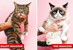 Today Is The Day Lil BUB Met Grumpy Cat -- click through to see the cutest Vine ever!