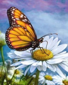 Butterfly Rests on a Daisy - Aviva Gittle Gifts