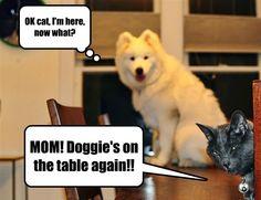 You Betrayed Me, Cat!