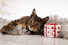 Nie dawaj #kota w prezencie!