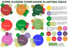 Green in Real Life: Ideas for the Home Garden - Companion Planting