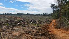 """Perù: """"I Mangiaboschi"""" e la deforestazione illegale"""