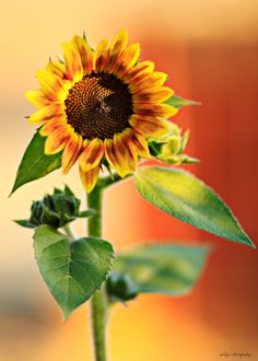 sunflower sunflower sunflower #Sunflower