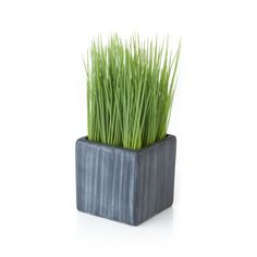 Row up these petite pots of faux grass for a modern twist on Easter décor or as an all-year interior accent.  Square cement pot adds a rustic feel to its contemporary shape. Cement potPlastic grassMade in China.