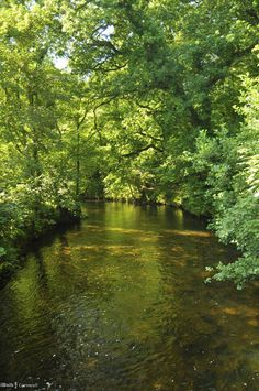 River Fowey (reachable via paths) at the Lanhydrock House and Garden, Bodmin, Cornwall, England.  There are 890 acres managed by the National Trust since 1953.
