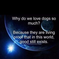Why do we love dogs so much?...