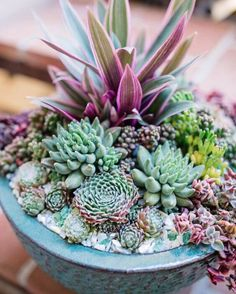 Succulents garden 450852612682182463 - Cactus & Succulent Bowls – Katrina Chambers Source by katrinas_pins Succulent Bowls, Succulent Centerpieces, Succulent Arrangements, Dining Centerpiece, Succulents In Containers, Cacti And Succulents, Planting Succulents, Succulent Landscaping, Succulent Gardening