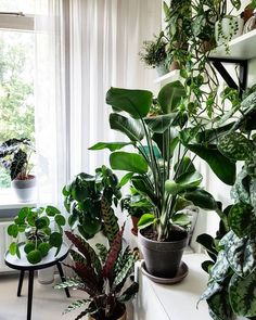Urban Jungle | Boho | Home Decor | Design | Indoor Plants | Plants #bohemian #plants #urbangardening #bohostyle www.cocoroseinteriors.com.au Hanging Plants Outdoor, Indoor Plants, Inside Plants, Plant Decor, Houseplants, House Plants, Interior Plants