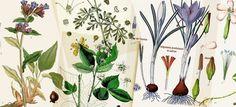 Les plantes médicinales : propriétés, quand récolter et comment les conserver, utile aussi, un calendrier des récoltes, dessication et conservation.