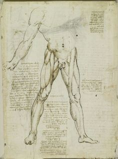 Leonardo da Vinci (Vinci - Recto: The muscles of the leg. Verso: The muscles of the trunk and leg Anatomy For Artists, Anatomy Art, Anatomy Drawing, Michelangelo, Life Drawing, Figure Drawing, Leonardo Da Vinci Zeichnungen, Visit Rome, Windsor