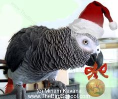 Top 10 Holiday Dangers for Birds