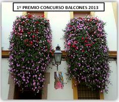 balcones plantas - Sök på Google