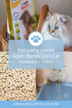 Testom ekologicznych produktów na naszym blogu nie ma końca! Tym razem przygotowaliśmy dla was recenzję naturalnego żwirku Super Benek Corn Cat. Jak wypadł w naszych testach? Apollo, Personal Care, Lifestyle, Cats, Blog, Self Care, Gatos, Personal Hygiene, Blogging