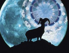 The Ram is associated with Aries, the first sign of spring. Spring Sign, Aries, Moose Art, Animals, Mandalas, Animales, Animaux, Aries Zodiac, Animal Memes