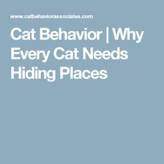 Cat Behavior | Why Every Cat Needs Hiding Places