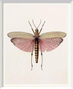 phymateus saxosus (grasshopper) - watercolour by brigid edwards (2003)