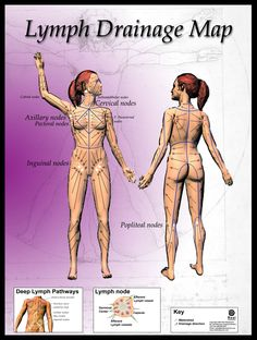 ❧ To help the system move the lymph fluid along it's root, dry brush in the directions of the arrows.