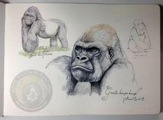 Silverback gorilla sketch Atlanta zoo