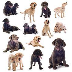 Discover hundreds of unique black, chocolate and yellow lab names... http://www.dog-names-and-more.com/Labrador-Retriever-Names.html