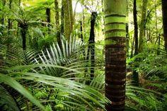 bos+palm%3A+Lush+gebladerte+in+de+tropische+jungle