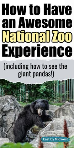 Everything you need to know for a fantastic trip to the Smithsonian National Zoo in Washington DC: The National Zoo is an amazing Washington, DC bucket list experience! It's a kid-friendly activity that adults will love, too! See giant pandas, sloth bears, tigers, lions, and more! Follow these Washington, DC travel tips for a great day at the zoo! #nationalzoo #washingtondc #bucketlist Zoo Travel, Travel Tips, Washington Dc Trip, Family Vacations, Family Travel, Dc Zoo, Zoo Activities, Giant Pandas, Jefferson Memorial