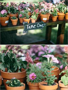 Wedding favor ideas: Tiny pots with with flowers in them.