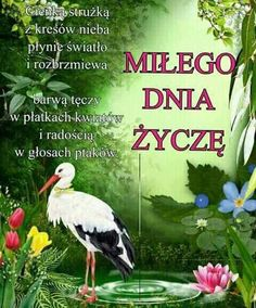Miłego dnia Parrot, Good Morning, Bird, Pictures, Facebook, Text Posts, Thinking About You, Polish, Acre