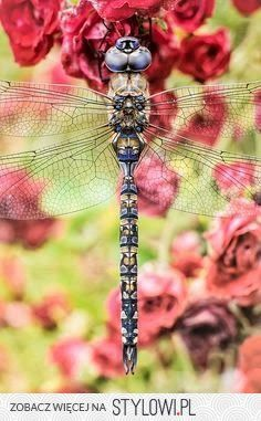 photography dragonfly