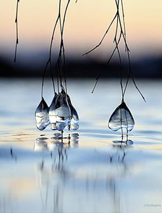 everyday a different color, beautiful gifs, soft goth, nature. images that I like and attract my attention. I hope you'll find images here for your taste too. Photo Trop Belle, Foto Nature, Cool Photos, Beautiful Pictures, Amazing Photos, Water Droplets, Foto Art, Rain Drops, Dew Drops
