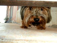 Our pretty, curious dog, Bella!