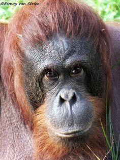 Also in the life raft was Orange Juice, an orangutan, until Richard Parker, the tiger, ate him. Tyler Hanson