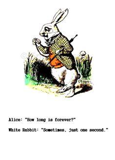 Un conejo que guía por el buen camino!!!
