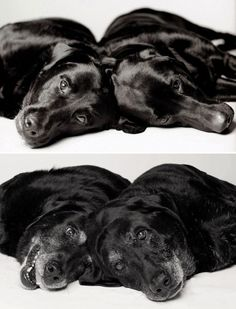 """Amanda Jones is a photographer who has been taking pictures of dogs for twenty years. Her newest series, called """"Dog Years: Faithful Friends Then & Now"""" shows dogs when they are babies and when they are old as well. Amanda Jones, Love My Dog, Chien Akita Inu, Animals Beautiful, Cute Animals, Griffon Bruxellois, Dog Ages, Dog Years, Tier Fotos"""