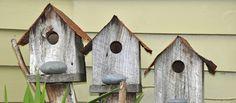 Una casa para cada pájaro