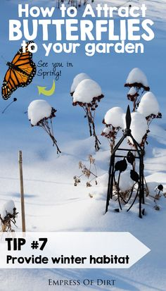 Tip #7: Provide winter habitat for overwintering butterflies. See more tips for attracting butterflies to your garden. #sponsored