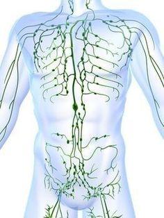 Comprendre comment votre système lymphatique soutient tous les autres systèmes dans le corps – y compris le système immunitaire, digestif, dedétoxification et le système nerveux – peut être un élément extrêmement bénéfique et souvent négligépour la véritable santé. En fait, beaucoup de spécialistes croient que la mauvaise santé de la lymphe sous-tend une foule de …