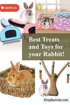 Rabbit bedding, bed nest, treats and boredom busters! shopbunnies.com Rabbit Toys, Pet Rabbit, Cute Baby Bunnies, Cute Babies, Rabbit Information, Rabbit Eating, Wild Rabbit, Bunny Care, House Rabbit