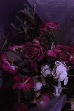 aubergine roses! #matterevolution #Glastonberry colour inspiration!