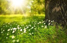 Flowers in the meadow spring nature flowers sun tree green morning beauty grass shine rays glare Prado, Was Ist Reiki, Alice Ruiz, The Moon Tarot, Spring Tree, Lawn Care, Public Domain, Cover Photos, Picture Quotes